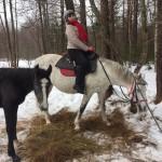 Cерая лошадь (10)