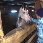 Cерая лошадь (13)