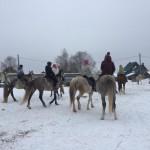 Cерая лошадь (15)