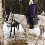 Cерая лошадь (18)