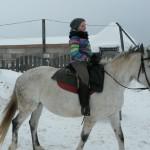 Cерая лошадь (23)