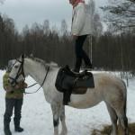Cерая лошадь (26)