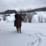 Cерая лошадь (4)