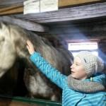 Cерая лошадь (46)
